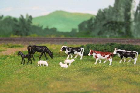 holstein koeien